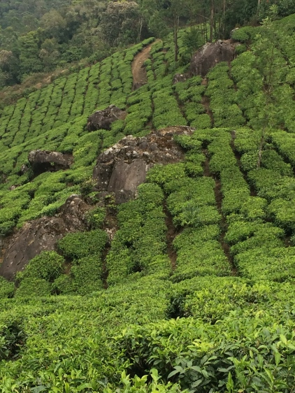 Tea Up and Down Slopes