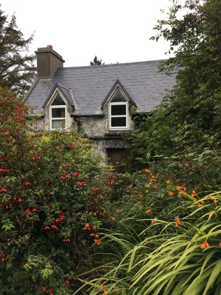 House being eaten by brambles and wildflowers